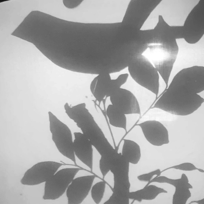 The Secret Garden - An image that shows a shadow of a bird sitting on a branch.
