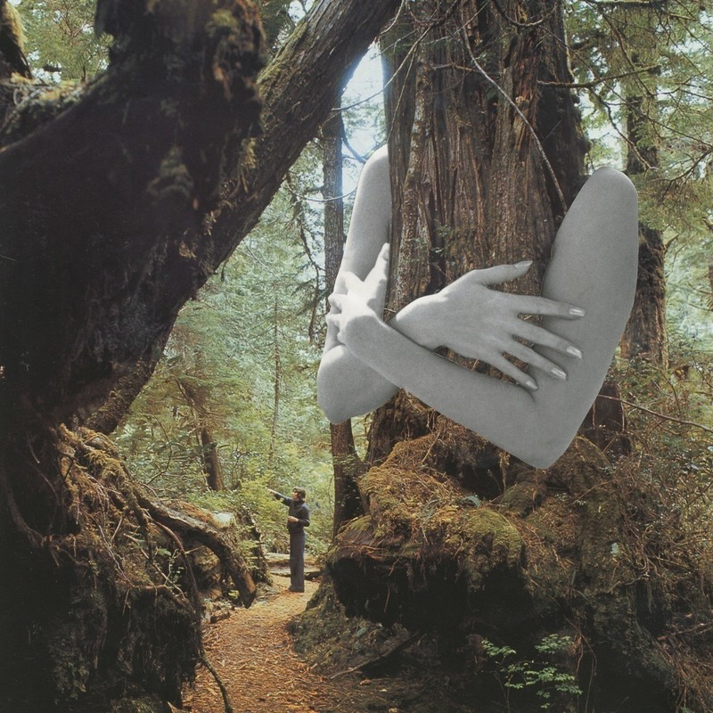 An edited image of a forest with large white arms hugging a tree from behind. A small man is standing further away looking up at the trees.
