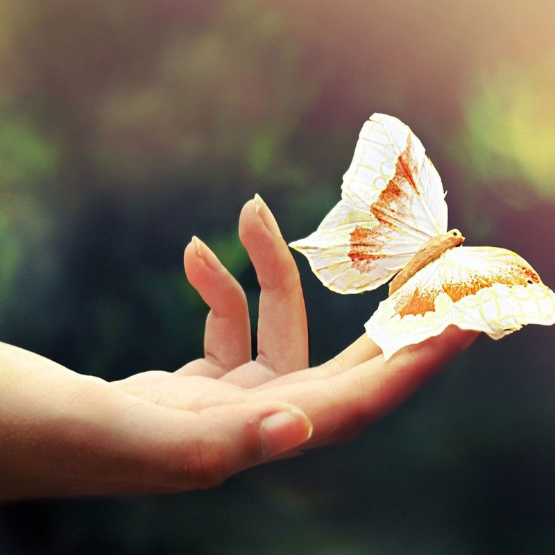 Scaled wp4002559 butterfly in hand wallpapers