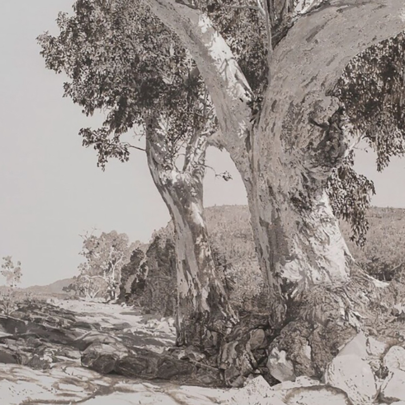 Scaled oratungatrees1