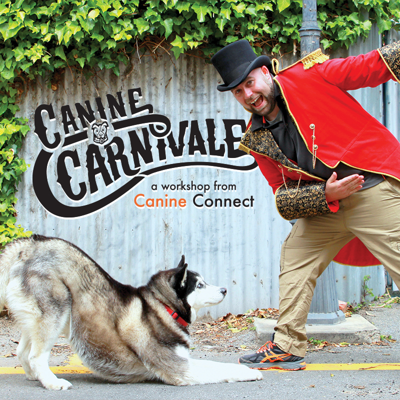 Scaled carnivale fringe